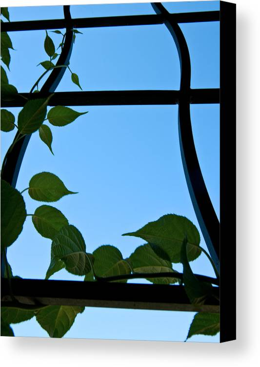 Vines Canvas Print featuring the painting Opportunity by Travis Crockart