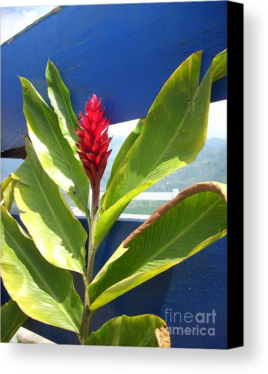 Flower Canvas Print featuring the photograph Red Ginger by Randi Shenkman