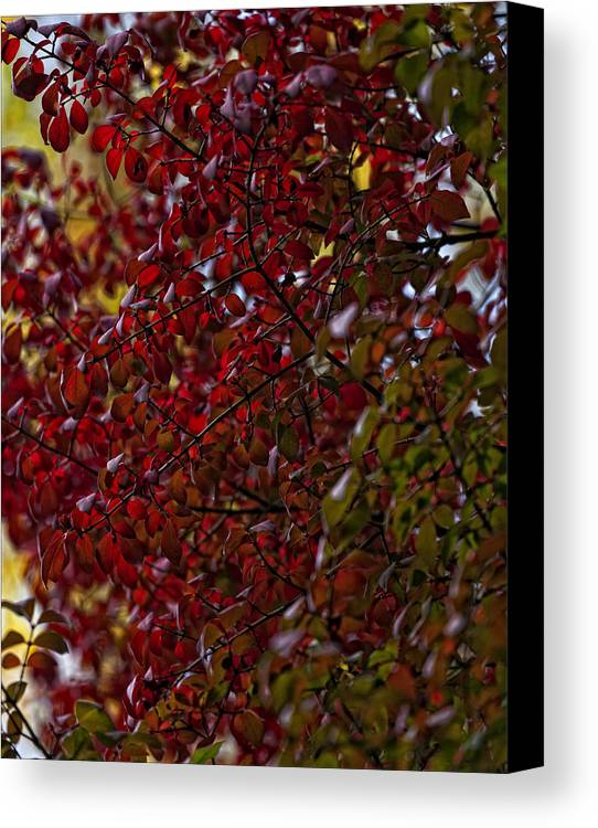 Fall Canvas Print featuring the photograph Fall 2010 10 by Robert Ullmann