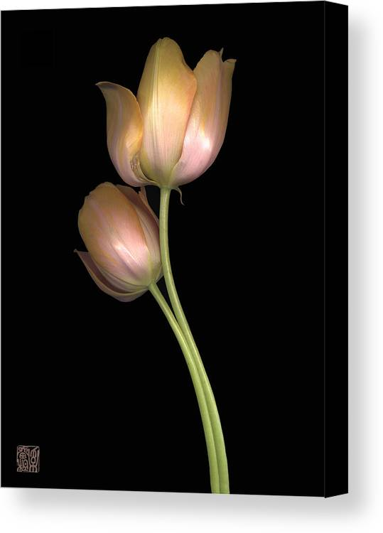 Flower Canvas Print featuring the photograph Tulip by Lloyd Liebes