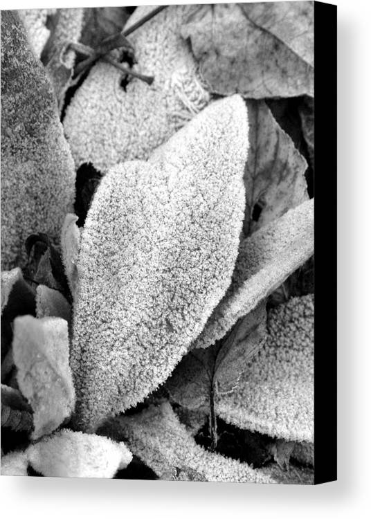 B&w Canvas Print featuring the photograph Untitled by Kathy Schumann