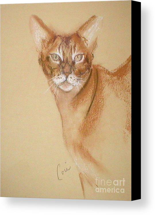 Pastel Canvas Print featuring the drawing Abyssinian by Cori Solomon