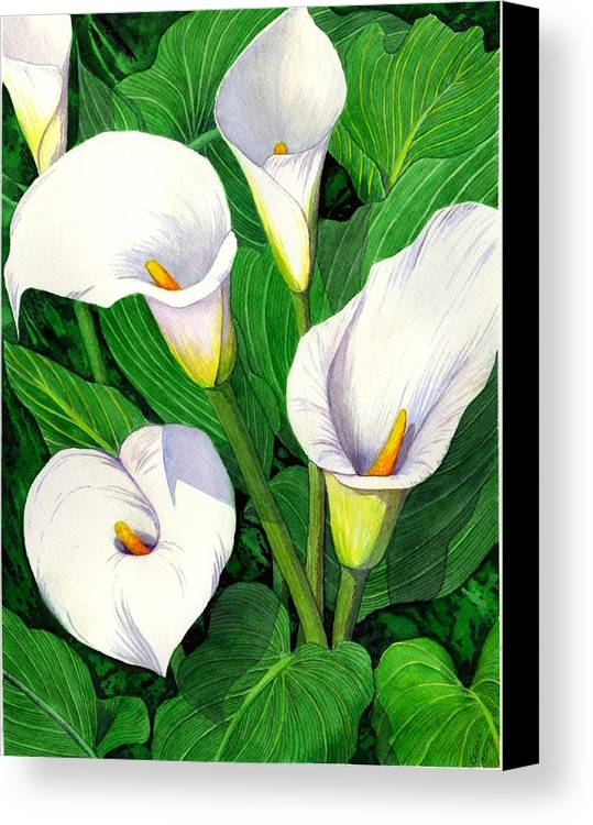 Lily Canvas Print featuring the painting Calla Lilies by Catherine G McElroy