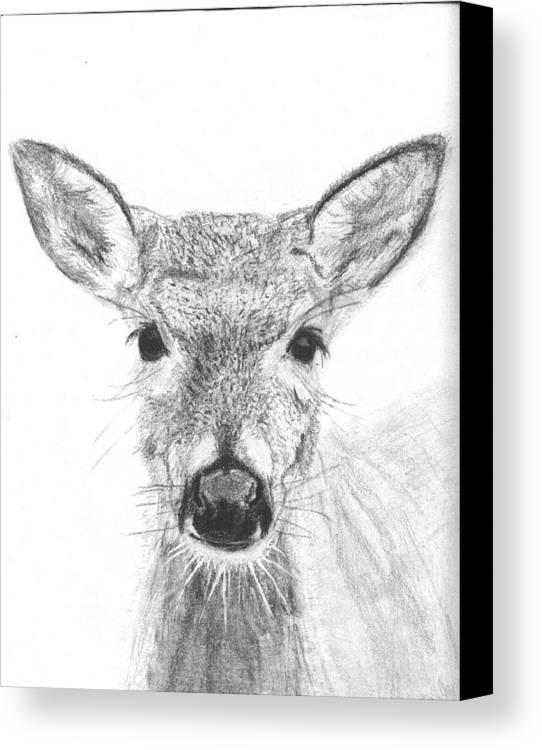 Deer Canvas Print featuring the drawing Female White-tailed Deer by Marqueta Graham