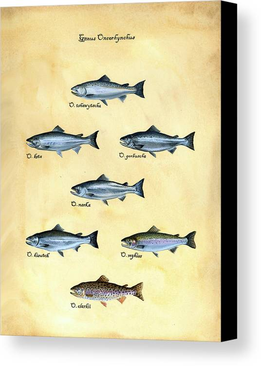 Salmon Canvas Print featuring the painting Genus Oncorhynchus by Logan Parsons