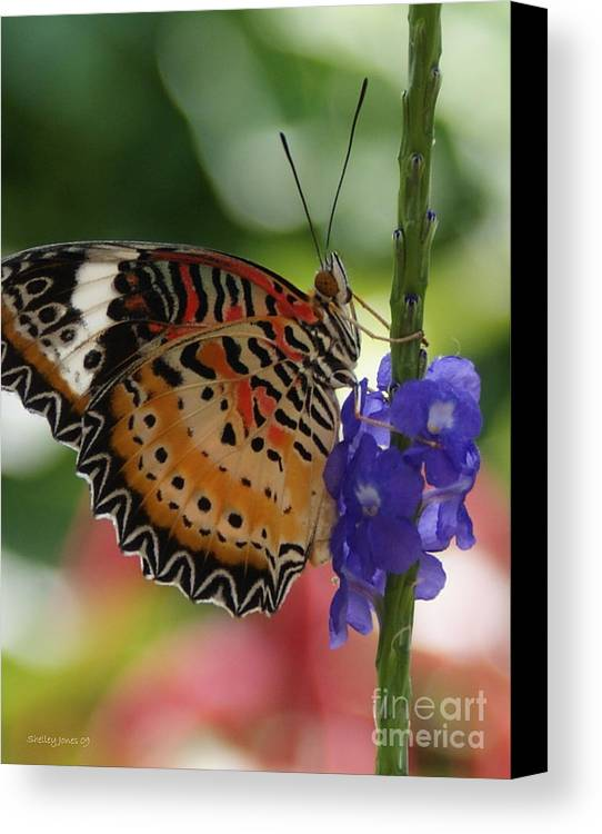 Butterfly Canvas Print featuring the photograph Hanging On by Shelley Jones