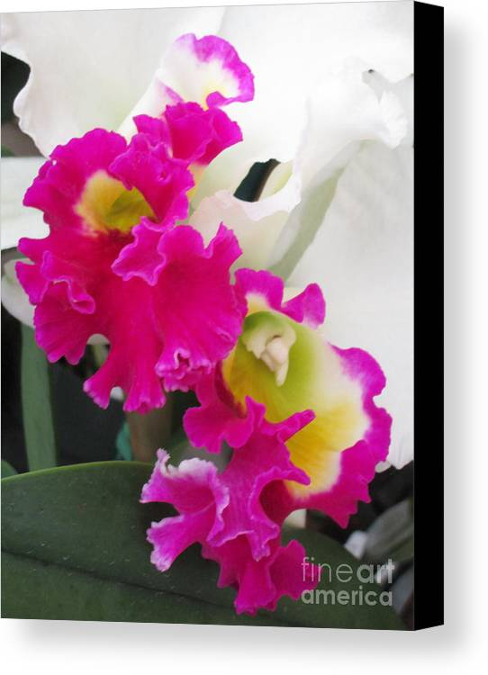 Orchid Canvas Print featuring the photograph Hawaiian Orchid 10 by Randall Weidner