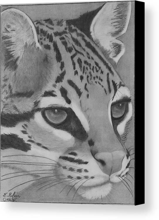 Wildlife Cat Oselot Drawing Blackandwhite Portrait Canvas Print featuring the drawing Oselot by Eileen Blair