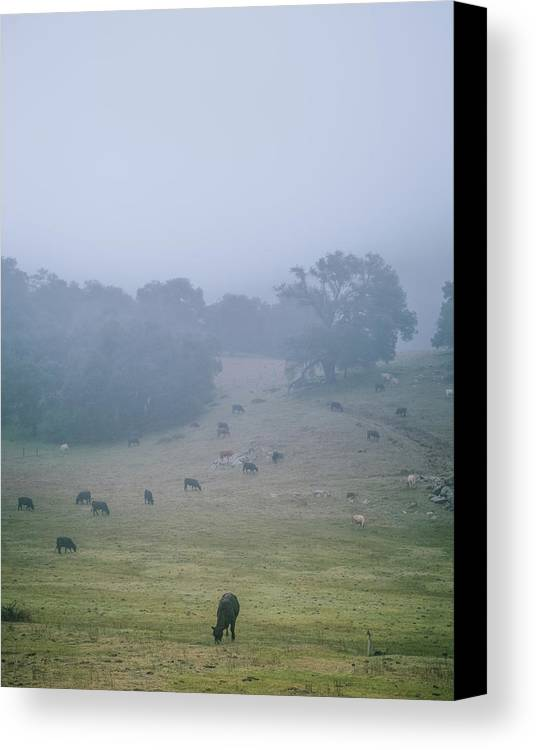 Cows Canvas Print featuring the photograph Ranchland by Joseph Smith