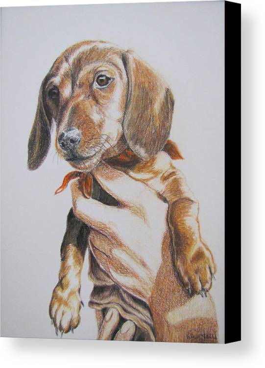 Puppy Canvas Print featuring the drawing Sambo by Karen Ilari