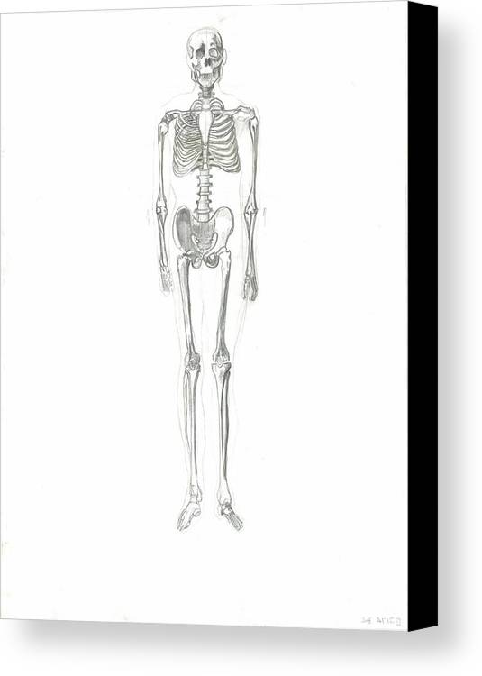 Canvas Print featuring the drawing Skeleton by Joseph Arico