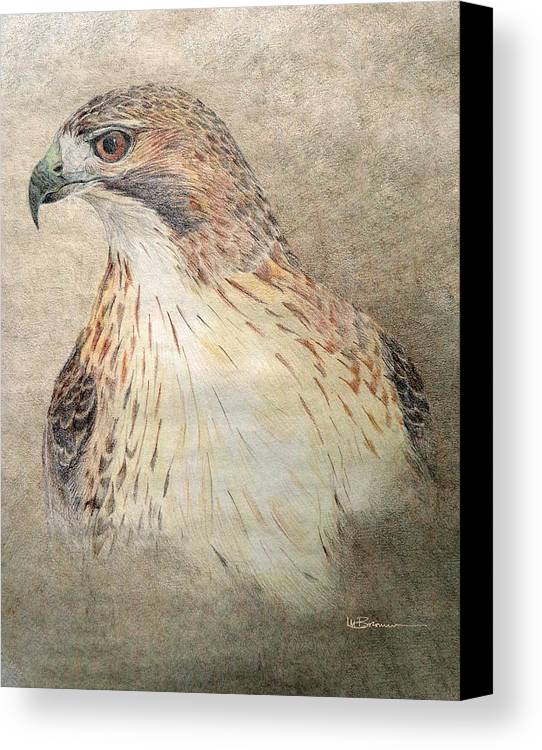 Red-tailed Hawk Canvas Print featuring the drawing Study Of The Red-tail Hawk by Leslie M Browning