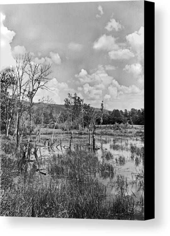 Ansel Adams Canvas Print featuring the photograph Swamp by Curtis J Neeley Jr