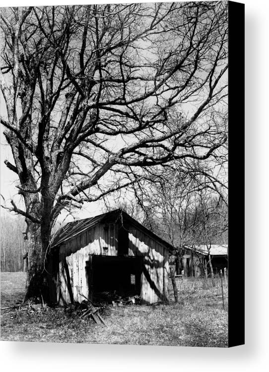 Ansel Adams Canvas Print featuring the photograph Tree-hut by Curtis J Neeley Jr