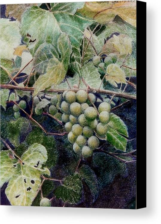 Green Canvas Print featuring the painting Wild Grapes by Constance Drescher