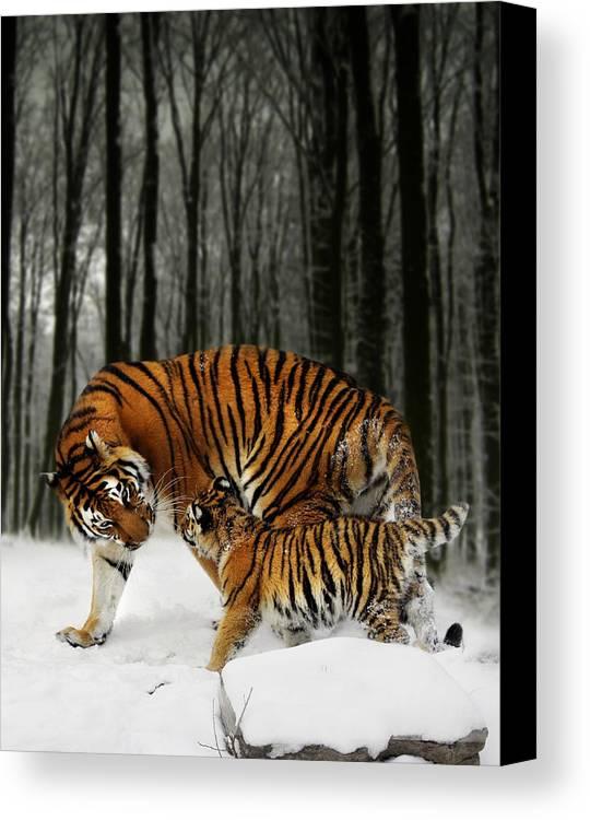Tiger Canvas Print featuring the digital art Winter Stroll by Julie L Hoddinott