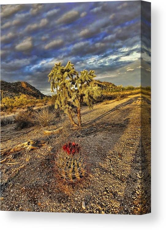 Arizona Canvas Print featuring the photograph Barrel And Cholla by Ryan Seek
