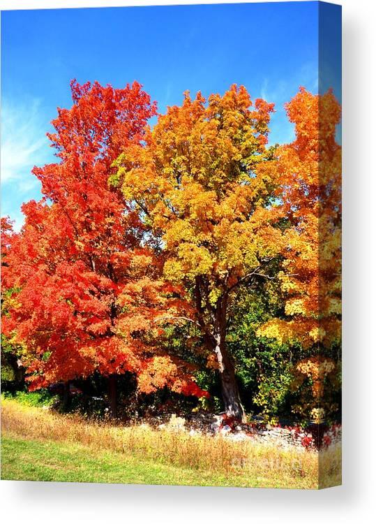 Autumn Canvas Print featuring the photograph Flamboyant Autumn by Cristina Stefan