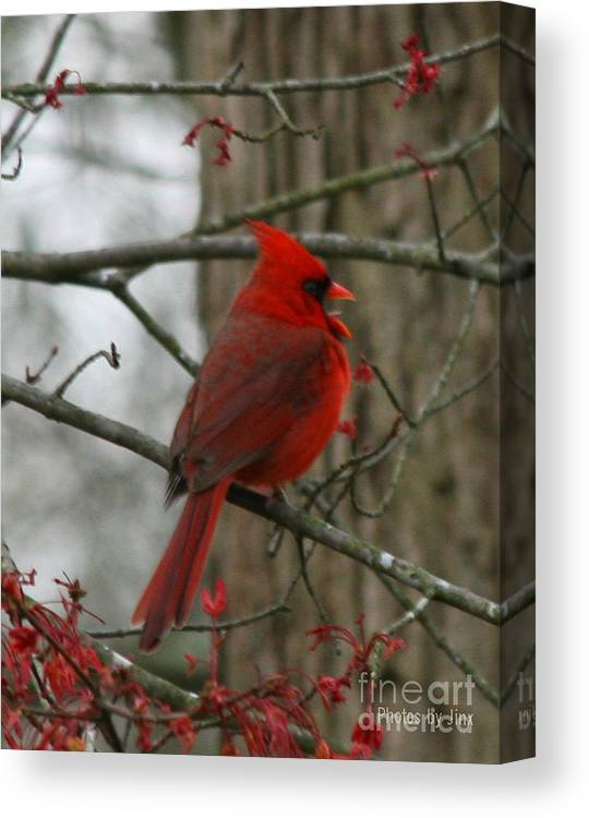 Bird Prints Canvas Print featuring the photograph Speading The Word.... by Jinx Farmer
