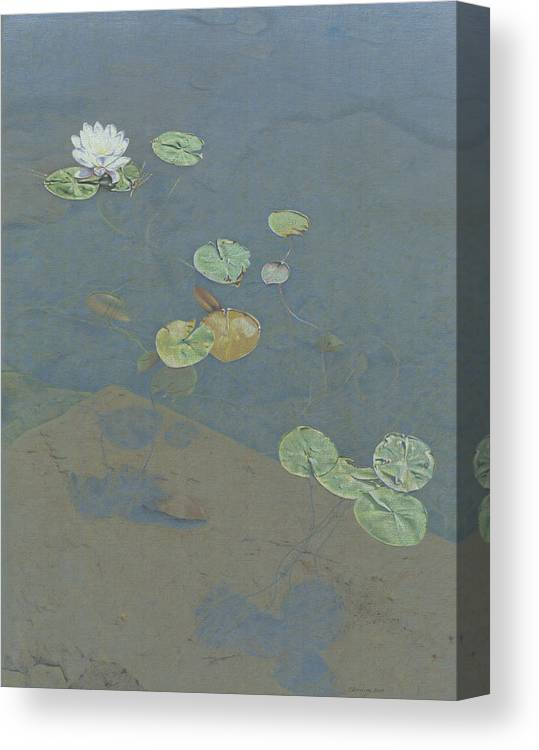 Lily Pad Canvas Print featuring the drawing Still Water by Clare Douglas