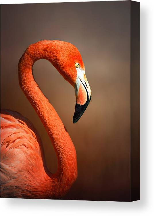 Flamingo Canvas Print featuring the photograph Caribean Flamingo Portrait by Johan Swanepoel