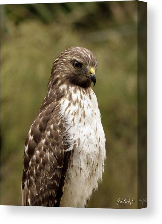 Bird Canvas Print featuring the photograph Dark Beauty by Phill Doherty
