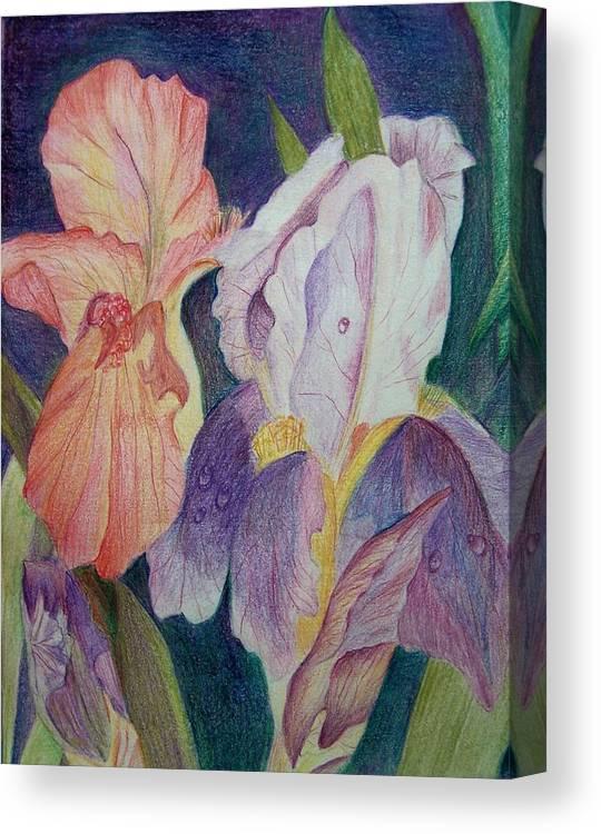 Iris Canvas Print featuring the drawing Dear Iris by Vijay Sharon Govender