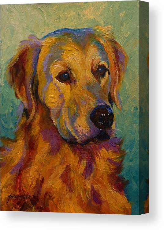Golden Canvas Print featuring the painting Golden Retriever by Marion Rose