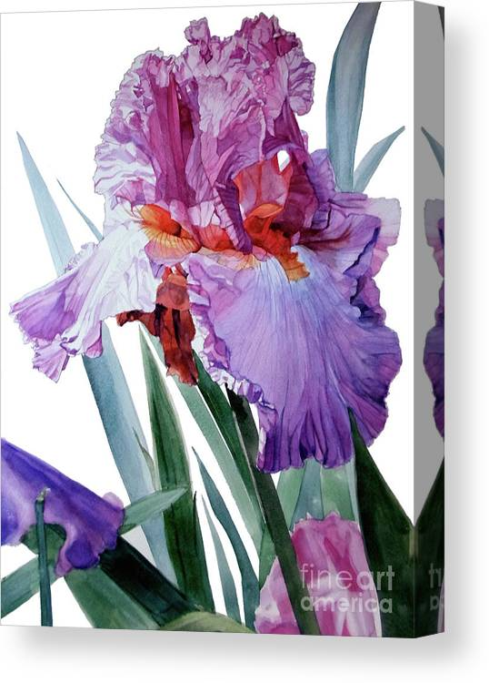 Watercolor Canvas Print featuring the painting Watercolor Of A Tall Bearded Iris In Pink, Lilac And Red I Call Iris Pavarotti by Greta Corens