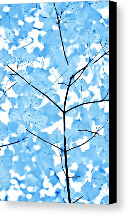 Leaf Canvas Print featuring the photograph Blue Leaves Melody by Jennie Marie Schell