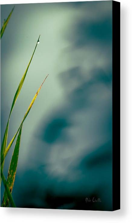 Grass Canvas Print featuring the photograph Dew Drop by Bob Orsillo