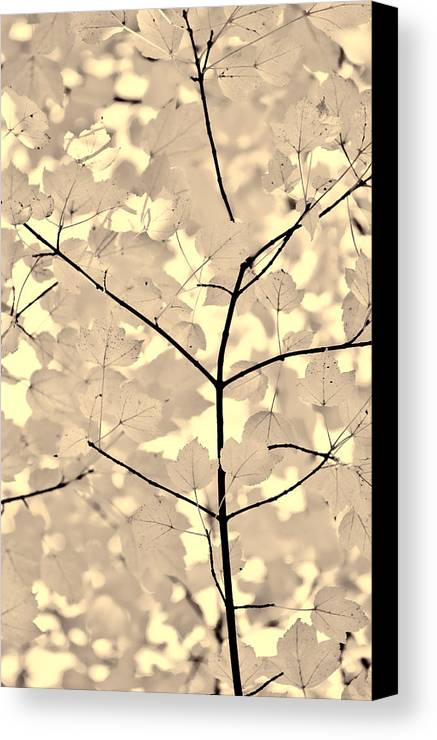 Leaf Canvas Print featuring the photograph Leaves Fade To Beige Melody by Jennie Marie Schell