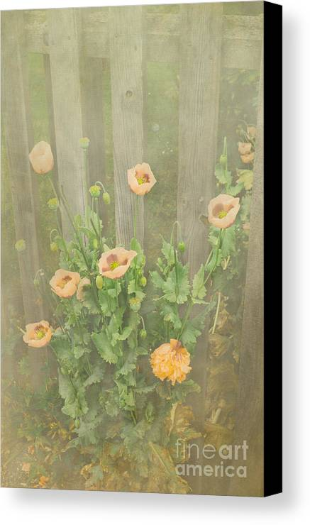 Poppy Canvas Print featuring the photograph Papaver Orientale 5 by Linsey Williams