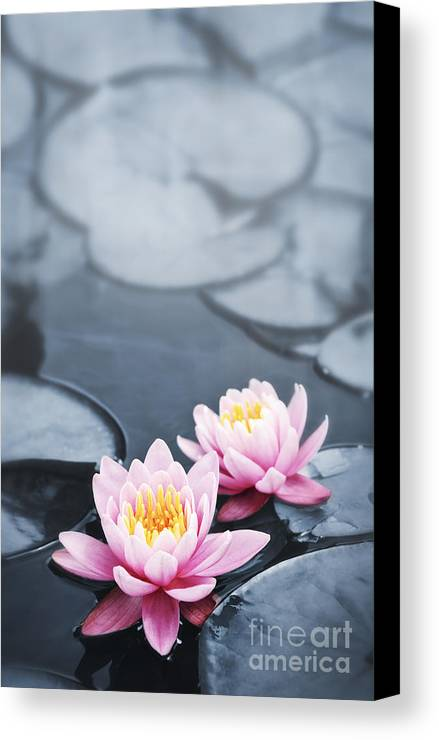 Blossoms Canvas Print featuring the photograph Lotus Blossoms by Elena Elisseeva