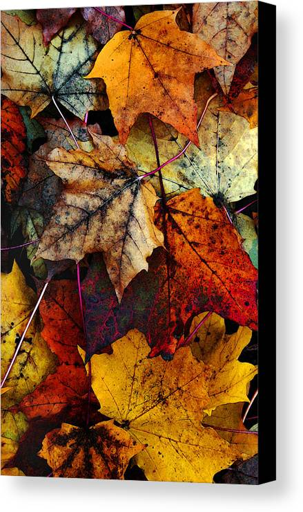 Fall Color Canvas Print featuring the photograph I Love Fall 2 by Joanne Coyle