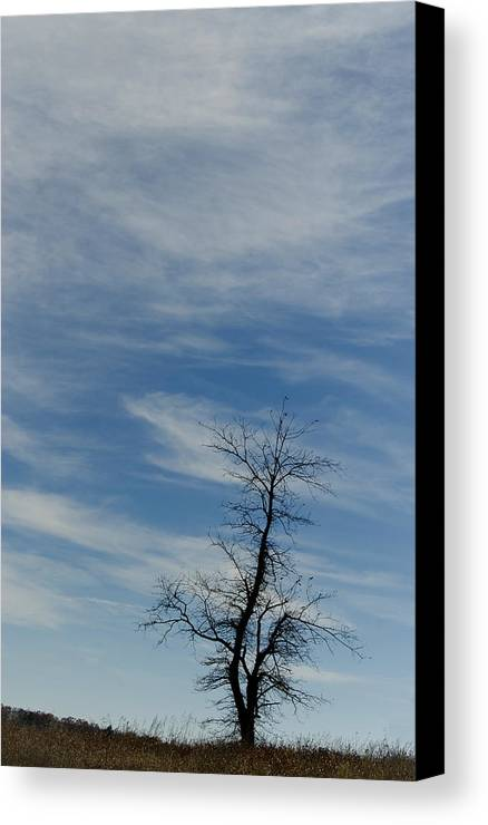 Scenic Tours Canvas Print featuring the photograph Isolated In The Blue by Skip Willits