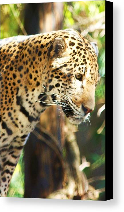 Jaquar Canvas Print featuring the photograph Jaquar 2 by Russell Barton
