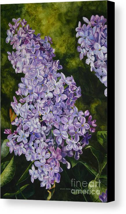 Lilacs Canvas Print featuring the painting Lavender Lilacs by Helen Shideler