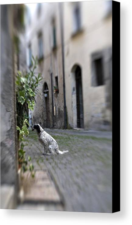 Dog Canvas Print featuring the photograph Waiting by Marilyn Hunt