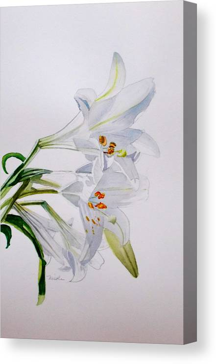 Lily. Flower Canvas Print featuring the painting Lily by Nicole Curreri