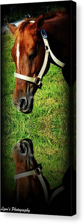 Horse Canvas Print featuring the photograph Who Are You by Desiree Lyon