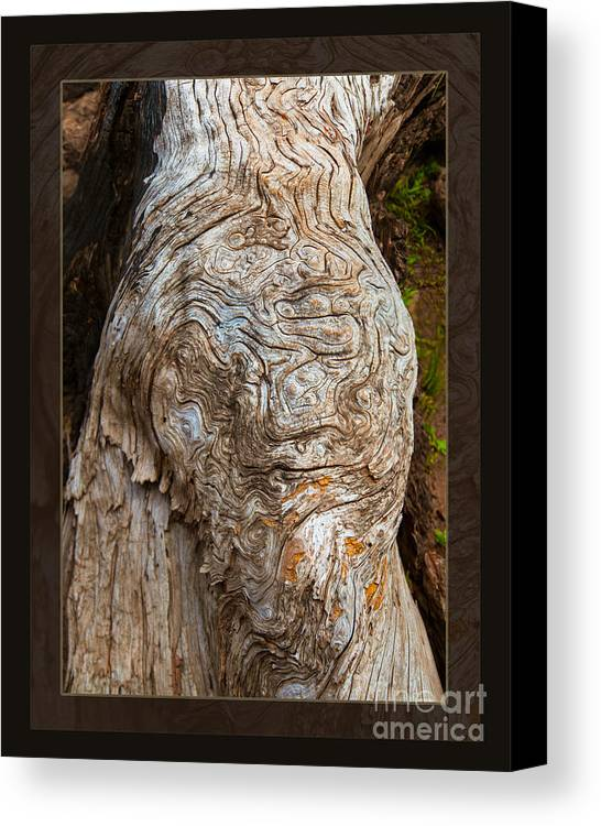 2013 Canvas Print featuring the photograph Ancient Expression Of Beauty by Omaste Witkowski