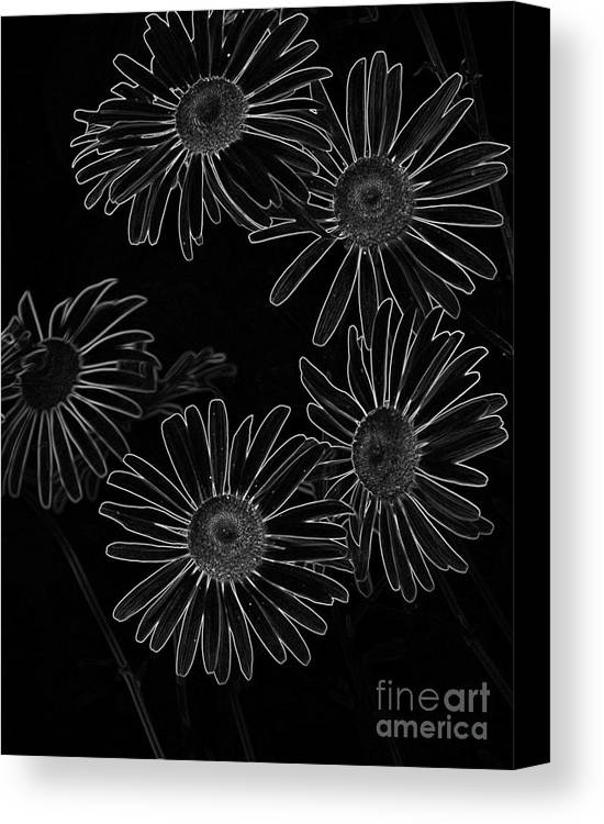 Bold Daisies Canvas Print featuring the mixed media Bold Daisies by Chalet Roome-Rigdon