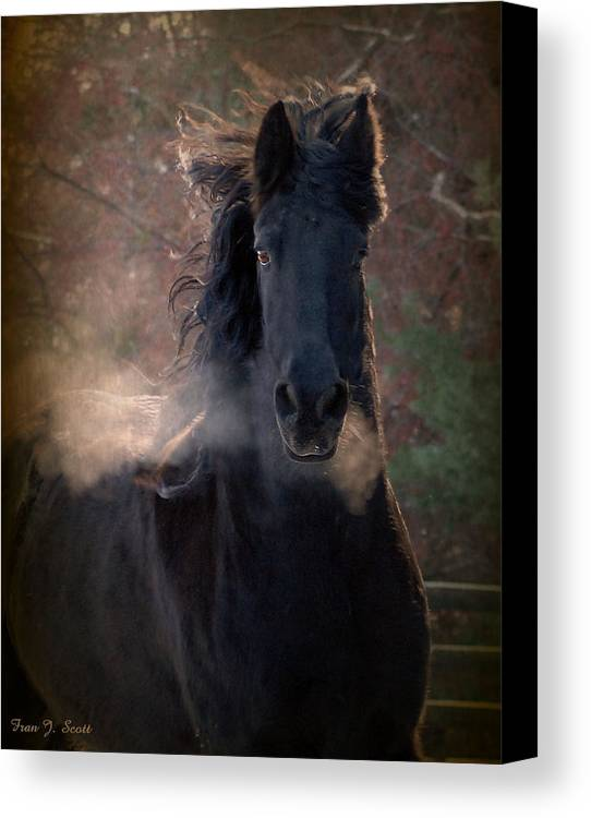 Horses Canvas Print featuring the photograph Frost by Fran J Scott