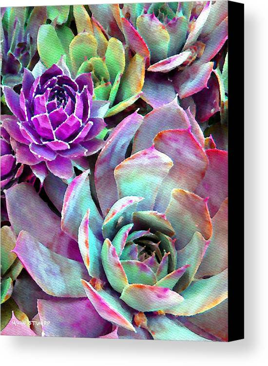 Hens And Chicks Photography Canvas Print featuring the photograph Hens And Chicks Series - Urban Rose by Moon Stumpp