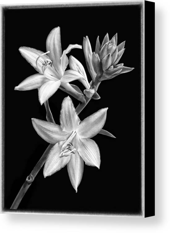 Hosta Flowers In Black And White Canvas Print featuring the photograph Hosta Flowers In Black And White by Carolyn Derstine