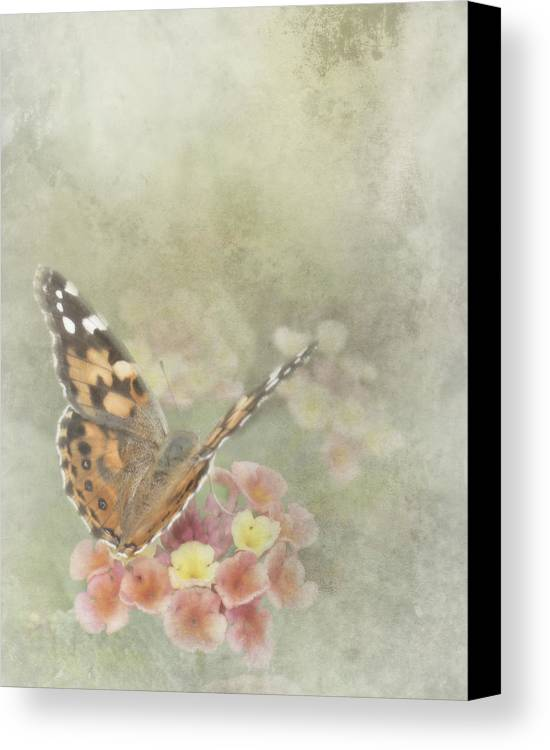 Butterfly Canvas Print featuring the photograph Ready For Flight by David and Carol Kelly