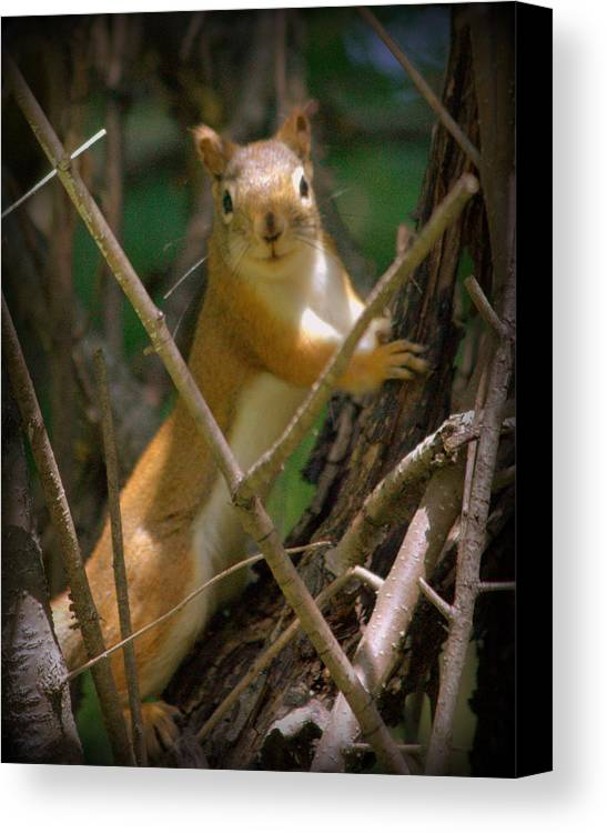 Squirrel Canvas Print featuring the photograph Happy To See You by Felicia Bundy