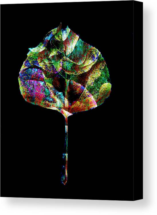 Leaf Canvas Print featuring the photograph Jewel Tone Leaf by Ann Powell