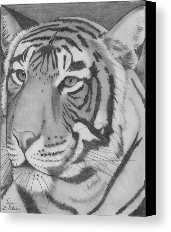 Cat Canvas Print featuring the drawing Tigar by Eileen Blair